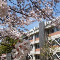 母校の写真部が撮影した桜